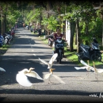 indonesia-bagus-seni-31