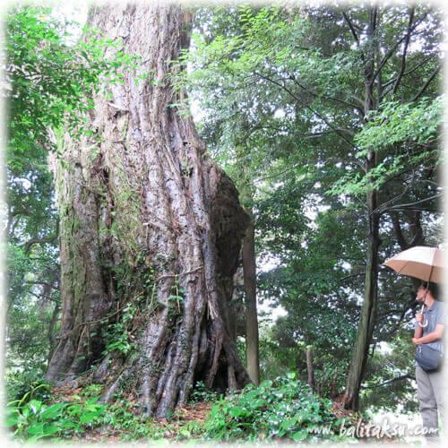 福岡・糸島のバリ舞踊・仲哀天皇伝説のある糸島市の宇美八幡宮、そして古墳群でバリ舞踊公演を行うのが我々夫婦の長年の夢でした。創作バリ舞踊Under The Tree三部作を、この樹の下で踊りたい。福岡出身(糸島市)で、プロとしてバリ島でバリ舞踊家となり、舞踊団を作っている井上真由美と、同じく楽団を設立したバリ・ガムラン演奏家の夫カデ・フェリが綴る「九州にバリ舞踊のイベントを興す」経緯のテキスト